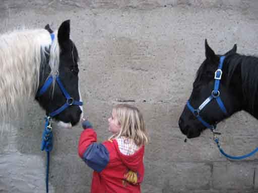 Das Angebot der Double C Paint Horse Ranch