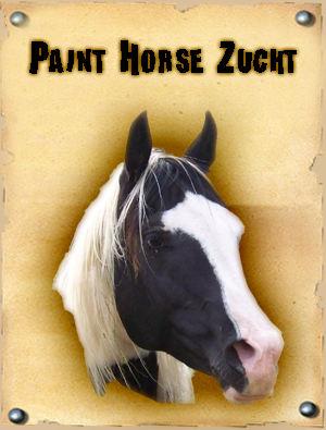 American Paint Horse Pferdezucht
