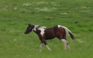 Frieda Pferd heute August 16-1