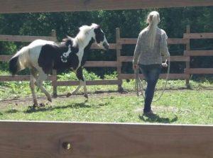 Paint Horse Fohlen Verkauf: Meggie -Stutfohlen