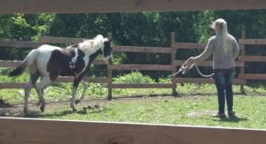 paint horse stute meggie mai 2017